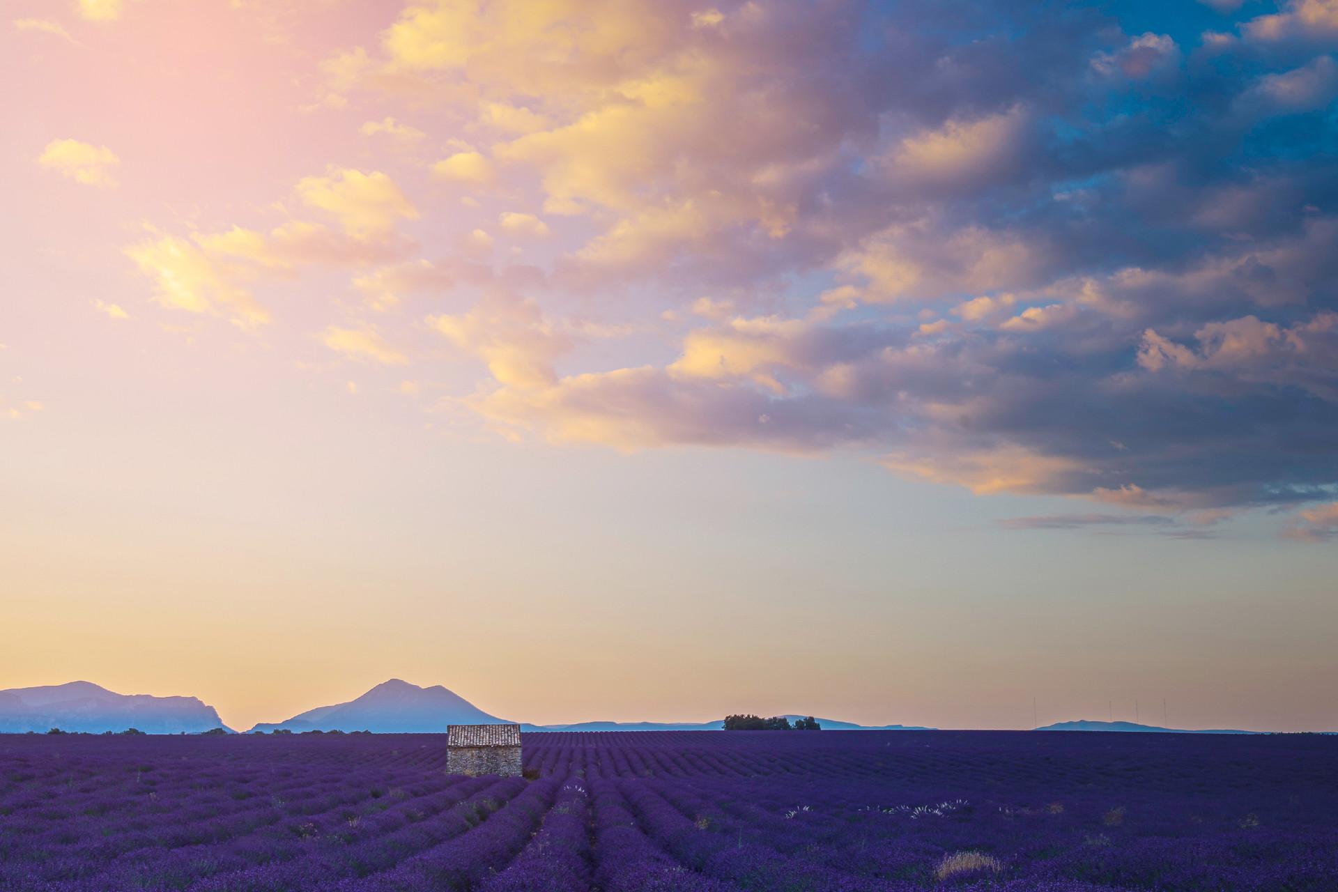 lever de soleil sur les lavandes